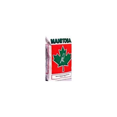 T3 Platino Manitoba 1kg scad 01/21
