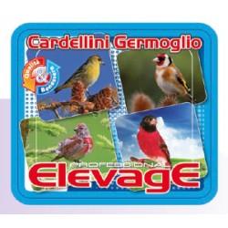 Cardellini Germoglio Elevage 1kg scad. 05/18