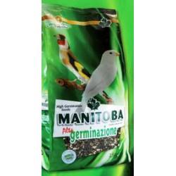 Grani alta germinazione Manitoba 2,5 Kg Scad. 01/21